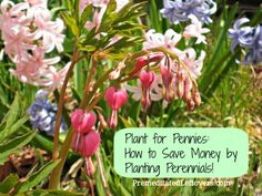 Planting perennials can save you money over time because they don't need to be replaced. Plus they can be divided to produce more plants in the future.