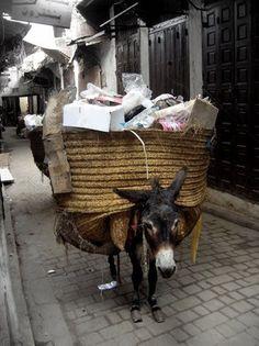 donkey overload