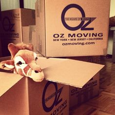 Moving Day! #moving #old #new #apartment #place #ozmoving #boxes #fragile #excited #inthebox #woodfloor #giraffe #rafthegiraffe