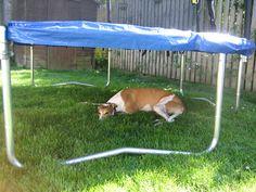 Verkoeling in de schaduw van de trampoline.