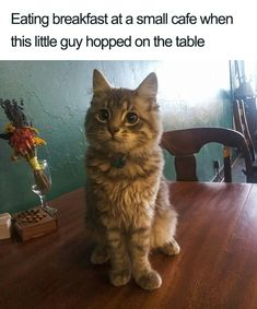 Wholesome Animal Memes To Start The Week Off Right - World's largest collection of cat memes and other animals Funny Animal Memes, Cute Funny Animals, Cute Baby Animals, Cat Memes, Funny Cute Cats, Funny Kittens, Funny Memes, Kittens Cutest, Cats And Kittens