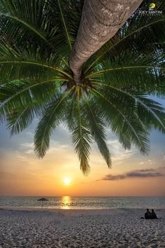 Tropical Beaches With Palm Trees Beautiful Sunset, Beautiful Beaches, Surf Mar, The Beach, Tropical Beaches, Beach Scenes, Beach Photos, Amazing Nature, Vacation Spots