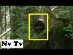 BEST BIGFOOT EVIDENCE EVER!! CAUGHT ON CAMERA!! HIKER FILMS REAL MASSIVE BIGFOOT!! - USA (2011) - HD - YouTube