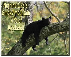Smoky Mountain Kind of Weekend!