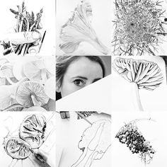 #artvsartist #artistvsart #mushrooms #foraging #wildplukken #wildfood #drawing #sketch #art #wildpickings #asperges #vlierbes #judasoor #elderflower #morieljes #morel #cantharellen @ellenclaireboomsma #ellenclaireboomsma #rodekoolzwam #paddestoelen #wildfoodlove #foerageren #vlier # by ellenclaireboomsma