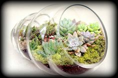 Another World Glass Sea Shell Terrarium on Etsy, $180.00