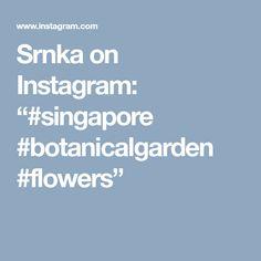 "Srnka on Instagram: ""#singapore #botanicalgarden #flowers"""