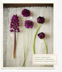 Wedding Flower Guide: hyacinth, japanese scabiosa, and french tulip. Purple hued flowers for your wedding