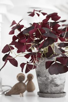 burgundy plant in galvanized metal pot, modern wood bird figurines, wine red, berry red, burgundy, dark cherry red, beet red, maroon, mulberry, garnet, ruby red, pantone tawny port