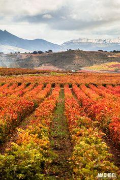 La Rioja y el vino, conociendo su cultura con los paisajes de otoño