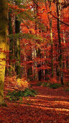 Pasear por el bosque en otoño, observar el color el ruido de las hojas al caer o al pisarlas...