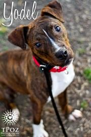 What a serious cutie-pie.  Available for adoption!!