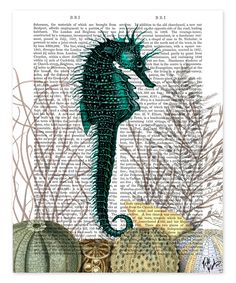 Sea Horse & Sea Urchins Book Print