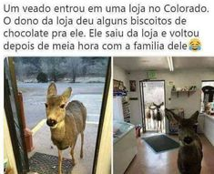 A deer entered a shop.half an hour later he came back with the squad - iFunny :) A Funny, Funny Memes, Hilarious, Jokes, Movie Memes, Funny Minion, Funny Pics, Funny Stuff, Funny Pictures
