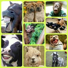 Funny animal faces...