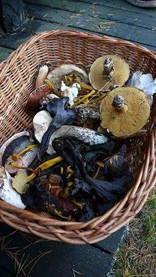 Fungi. Lithuania