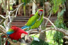20% OFF Bali Bird Park Tickets: Bali's Best Bird Experience - 0