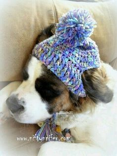 : Free Crochet Pattern ~A Silly Hat For My Silly Dog www.c… Free Crochet Pattern ~A Silly Hat For My Silly Dog www. Crochet Motifs, Knit Crochet, Crochet Patterns, Crochet Dog Hat Free Pattern, Crochet Ideas, Crochet Crafts, Crochet Projects, Sewing Crafts, Crochet Dog Clothes