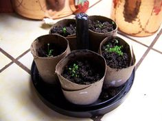 Reuse toilet paper rolls as seed starters in this simple terrarium how-to.