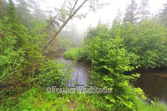 Foggy Morning  Scenic River View  Summer by FeatherWindStudio