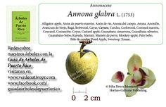 La Guía de Árboles de Puerto Rico es la publicación ilustrada más completa sobre nuestras especies de árboles endémicos, nativos y exóticos.