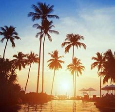 Palm trees in Thailand   #thailand #pattaya #palmtrees