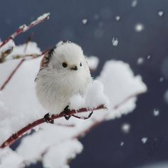 Pin by Stephanie on birds Cute Birds, Pretty Birds, Beautiful Birds, Animals Beautiful, Cute Creatures, Beautiful Creatures, Nature Animals, Animals And Pets, Sparrow Pictures