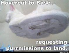 Hovercat requesting purrrrrmission to land