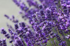 Het Groene Paradijs | Online bloemen en planten shop