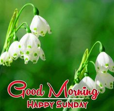 beautiful  good morning happy sunday hd images Good Morning Coffee Images, Good Morning Happy Sunday, Free Good Morning Images, Flower Pictures, Nature Pictures, Happy Sunday Hd Images, Blessing Message, Sunday Greetings, First Love