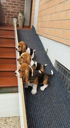 Basset hound ramp. Great for their short legs.  shop cool dog stuff at https://www.k9kitsch.com