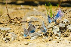 Photo about Butterflies on the ground with stones. Image of beauty, insect, color - 40341388 Vector Illustrations, Photos For Sale, Butterflies, Vectors, Royalty Free Stock Photos, Stones, Sign, Image, Beauty