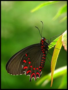 Butterfly Crazy #3: Pose by Benjamin Postlewait (flickr)