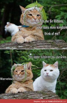 Fetch me my catnip, mittens