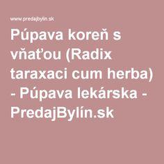 Púpava koreň s vňaťou (Radix taraxaci cum herba) - Púpava lekárska - PredajBylín.sk