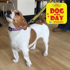 Lola Great Yarmouth, Dog Friends, Dog Days, Labrador Retriever, Dogs, Animals, Labrador Retrievers, Animaux, Doggies
