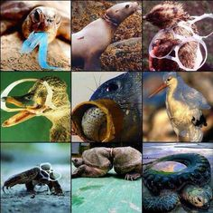 Photos of pollution harming marine life, especially useful to illustrate the effects of those six-pack plastic rings. Mother Earth, Mother Nature, Save Our Earth, Plastic Pollution, Water Pollution, Our Environment, Stop Animal Cruelty, Tier Fotos
