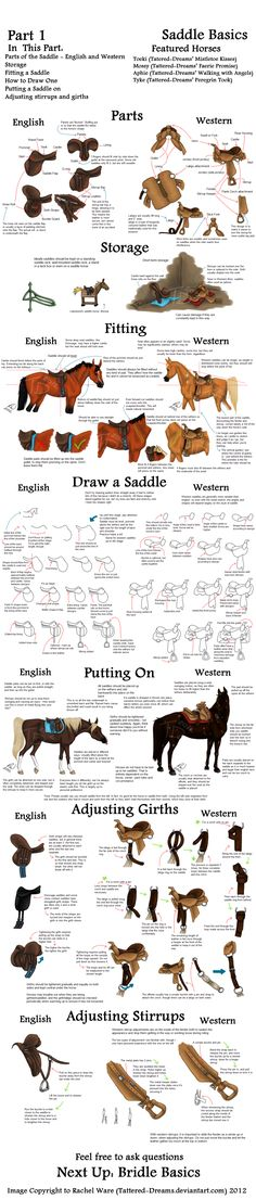 These aren't the only things out there of course, but it should get you started and keep your drawing busy. Available in smaller, more digestible chunks at www.htdhorses.com :