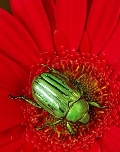 9. This is an example of complimentary colors, this causes more emphasis on either the beetle or the flower.