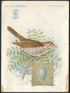 1927 Trade Card Singer Sewing Machine Bird Series Wood Thrush - eBay
