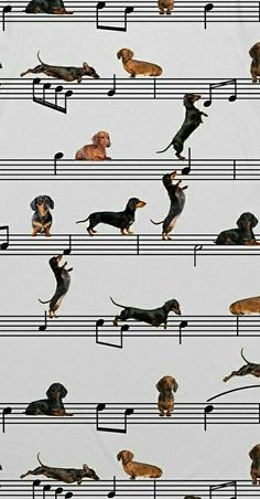 The Diverse Dachshund Breed - Champion Dogs Dachshund Puppies Near Me, Dachshund Breed, Dachshund Funny, Dachshund Art, Dogs And Puppies, Dapple Dachshund, Chihuahua Dogs, Doggies, I Love Dogs