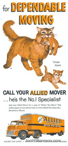 moving day advertisement featuring mother cat