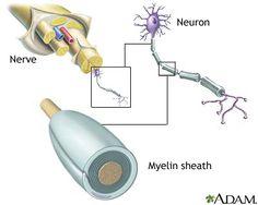 Nervous System Information