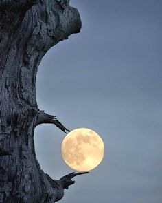 Moon of Mine. The Moon reflects everything. Moon of Mine reflects love! Moon Images, Moon Photos, Moon Pictures, Nature Pictures, Beautiful Pictures, Moon Pics, Creative Pictures, Moon Photography, Amazing Photography