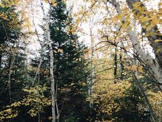 sommerlanding:  i love having a cabin in the woods to go to in the fall  please dont change/remove caption or source or promote your own blog xx
