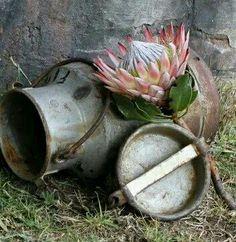 Protea Art, Protea Flower, Pictures To Paint, Art Pictures, Bull Painting, Goeie More, Flower Farmer, Decoupage Paper, Chalkboard Art