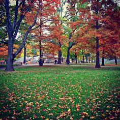 Enjoying the colors of Fall. #CentralPark #Manhattan #NYC #CentralParkBikeTours