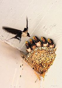 velké latino ptáky tumblr