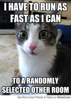 Cat logic fail
