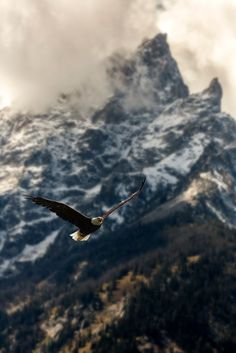 Bald Eagle Against Grand Teton by Scott Wilkes on American National Parks, Green Earth, Grand Teton National Park, Birds Of Prey, Bald Eagle, Aesthetic Wallpapers, Cool Photos, Backdrops, Nature Photography